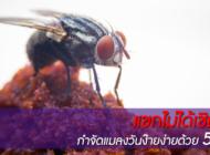 แขกไม่ได้เชิญ! กำจัดแมลงวันง๊ายง่ายด้วย 5 วิธี ลองเลย